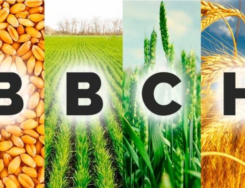 Диагностика стадий развития озимой пшеницы по шкале ВВСН. Методическое пособие