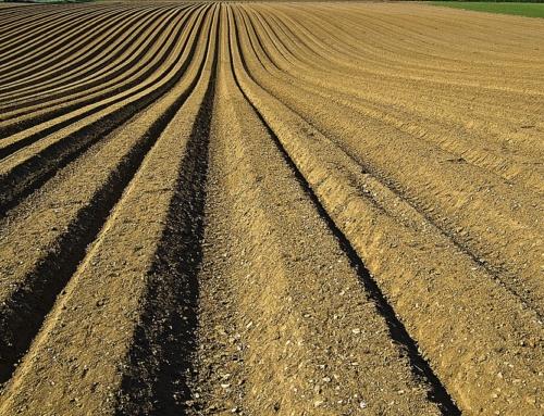 Азот для мінералізації рослинних залишків і як харчування для рослин