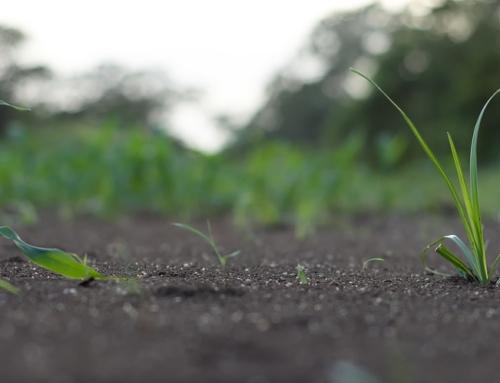 Основний обробіток грунту під кукурудзу