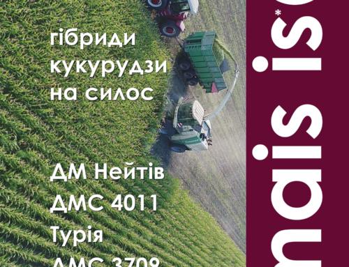 Кукурудза на силос: особливості вирощування і гібриди від компанії «МАЇС»