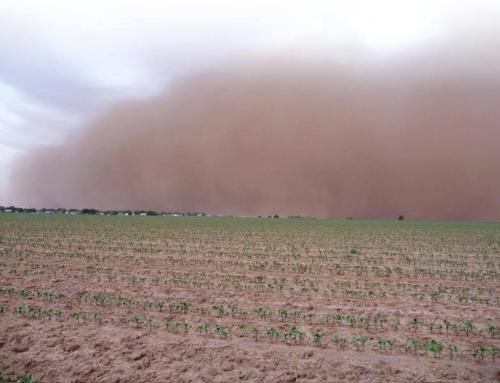 Вітрова ерозія – чому виникає і що робити