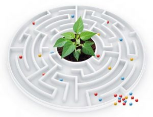 Удобрения: тернистый путь от гранулы к корню