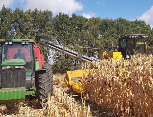 Промислова підготовка насіння кукурудзи на насіннєвому заводі Рост Агро
