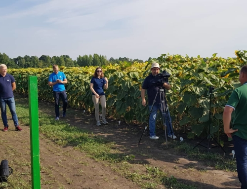 Поле на долоні – досліди в посівах соняшнику
